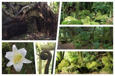 Coromandel: Impressionen vom Cathedral Cove Trail