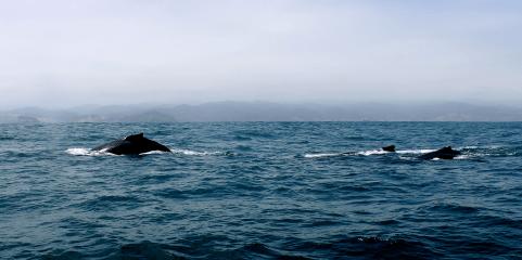 Wale, ein faszinierender Anblick
