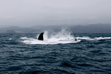 Ecuador_Puerto-Lopez109_Whale-Watching