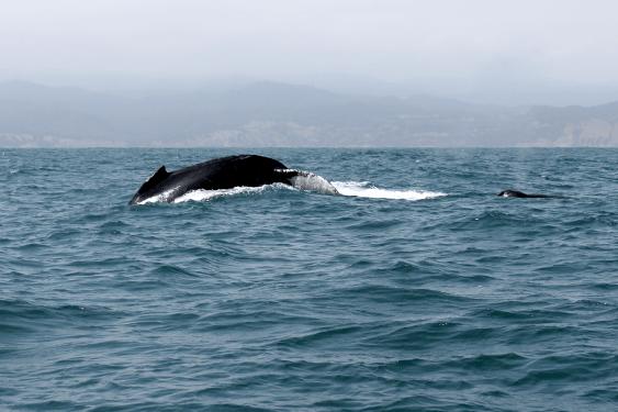 Ecuador_Puerto-Lopez110_Whale-Watching
