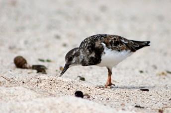 Galápagos, San Cristobal, Los Tijeretas: Und wieder ein seltsamer Vogel