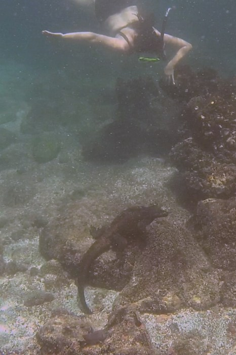 Galápagos, San Cristobal, Los Tijeretas: Otti Auge in Auge mit dem Iguana