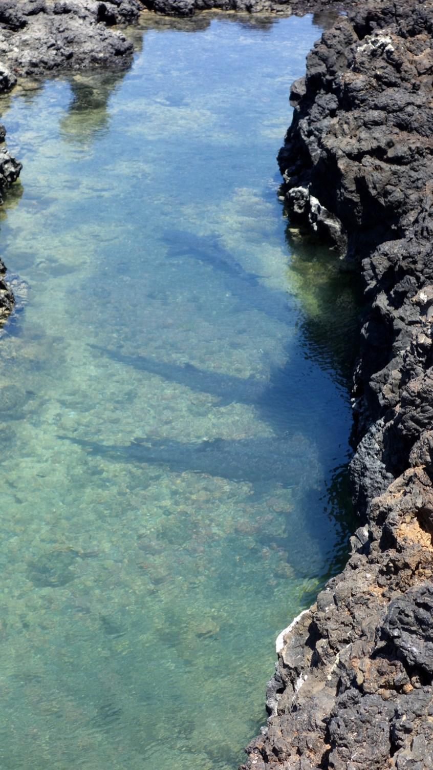 Galápagos, Santa Isabela, Tintoreros: Ruheplatz der Riffhaie nach der nächtlichen Jagd