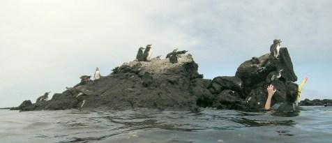 Galápagos, Santa Isabela, Los Tuneles: Die Galápagos Pinguine - Otti´s neue Lieblingstiere