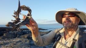 Galápagos, La Pinta, Fernandina: Unser Guide Ramirez demonstriert an einem Iguana-Skelett die Besonderheiten des Körperbaus