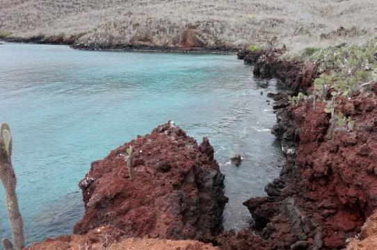 Galápagos, Rábida: Schroffe Klippen, das ideale Schnorchelrevier
