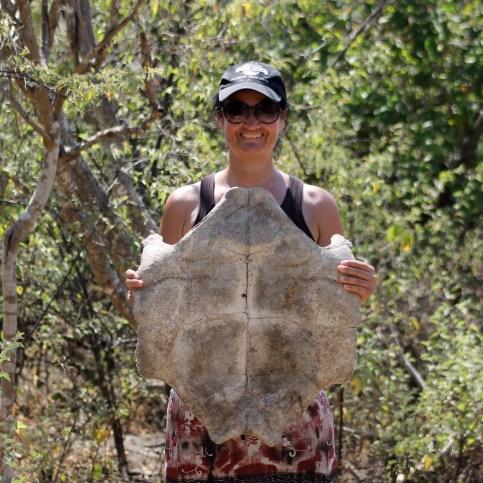 Galápagos, Urbina Bay: Wow, wir schreiben Geschichte! Eben ein ganz neues Exemplar einer Galápagos Riesenschildkröte entdeckt (Tortoise Ottiliensis Baseballkäppis) :-)