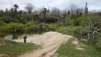 Galápagos, Santa Cruz, Cerra Dragone: Eine ganz andere Landschaft - der Weg zur Brackwasser-Lagune