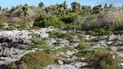 Galápagos, SouthPlaza: Ein Spiel der Farben (Dank Otti, wieder mal mit Seelöwe)