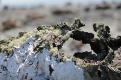Galápagos, Santa Isabela, Los Tintoreros: Bizarre Lavaformationen von Bakterienkolonien und Flechten überzogen