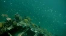 Belize, Caye Caulker: Schnorcheln am Wrack