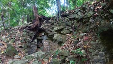 Palenque, Dschungeltour: Man kann hier hervorragend den Aufbau des Maya-Bauwerks erkennen und wie der Pflanzenwuchs die Struktur verändert haben