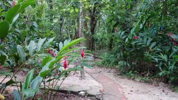 Palenque, El-Panchan: Schöne Spazierwege führen durch die gesamte Anlage
