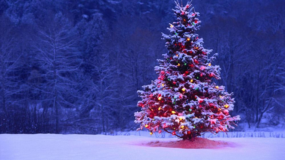 Festive season wishes oxbridge academy blog festive season wishes m4hsunfo
