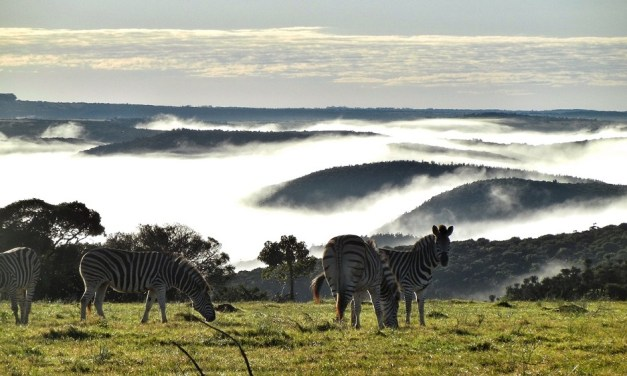 8 Reasons to Work in South Africa's Tourism Industry