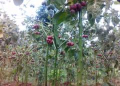 TIPS TOWARDS RELISHING THE OPULENCE IN FRUIT FARMING