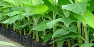 Oxfarm seedlings