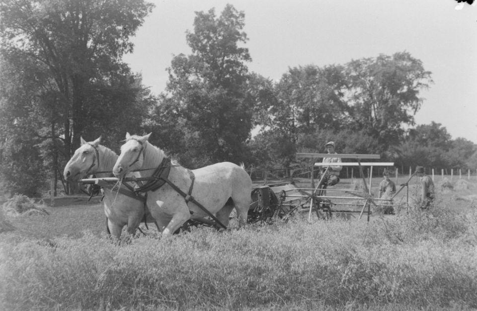 Agricultural students bring in the harvest 1941, Bibliothèque et Archives nationales du Québec