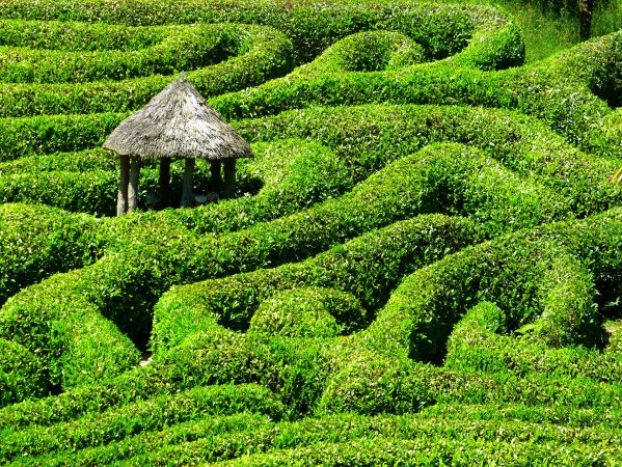 maze, labyrinth, puzzle, building, hedges, hedge maze, lost, confused, direction, dyslexia, dyscalculia,