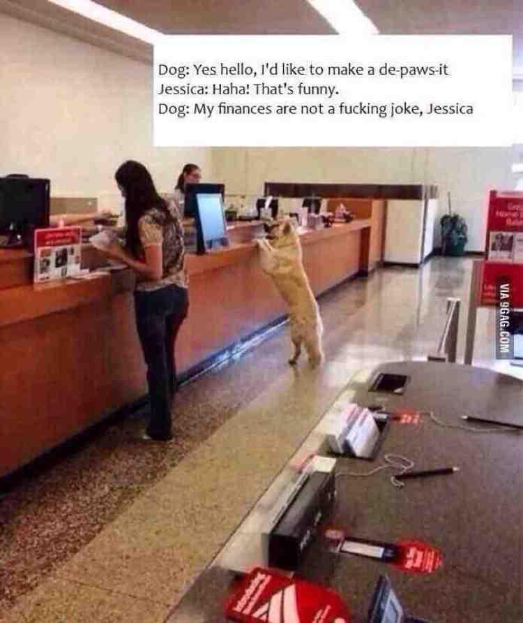 doggybank