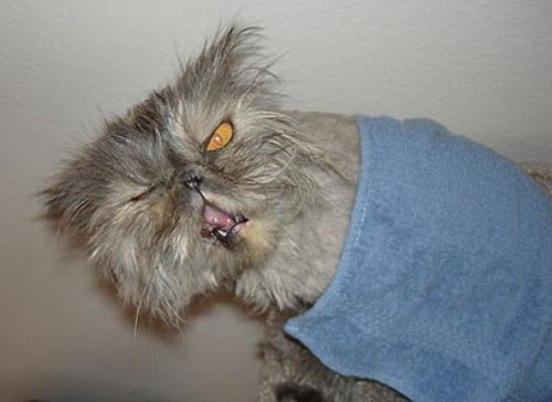 Ugly-Cats-08
