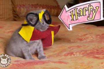 harry potter kitten