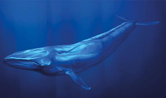 blue whale game kills