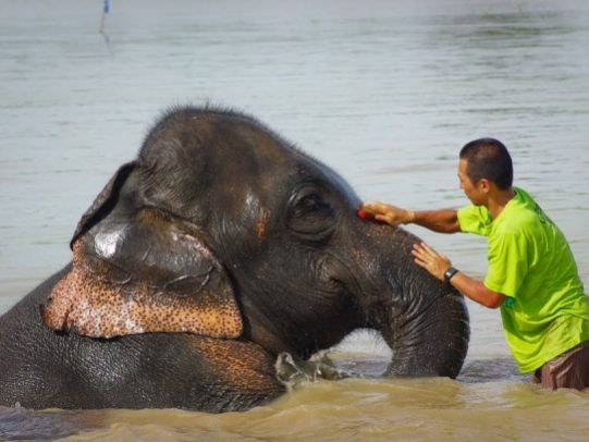 Volunteer elephants Thailand
