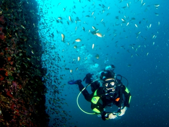 Diving and marine conservation in Thailand