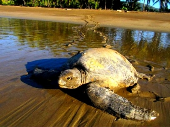volunteer turtle conservation