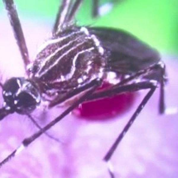 Zika-mosquito_20160524223401-159532