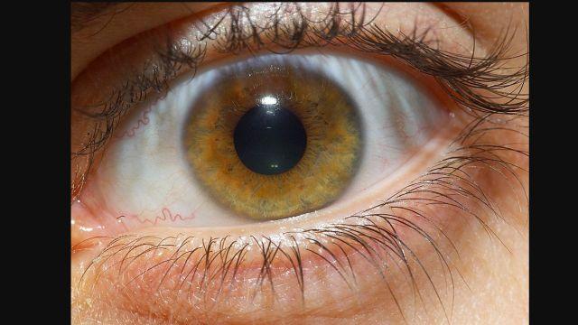 retina health_1502975589166.jpg