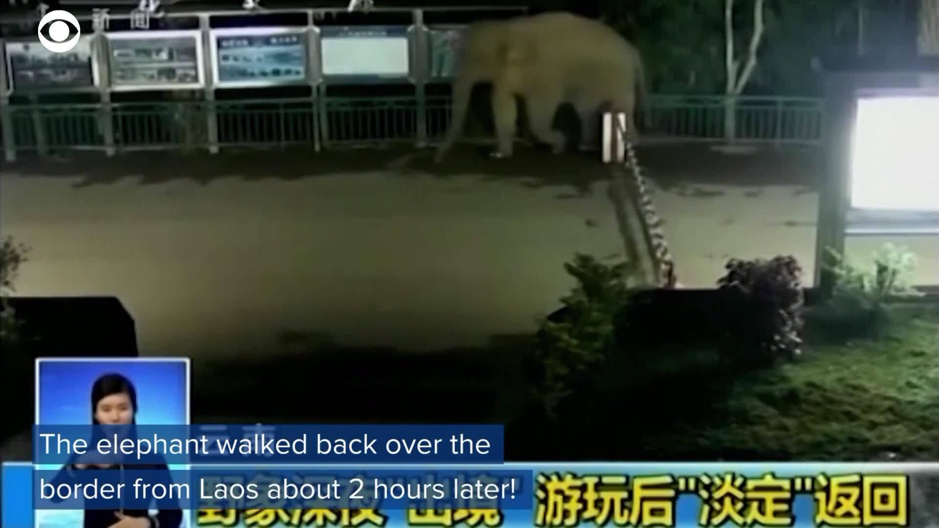 WEB_EXTRA__Elephant_Caught_Sneaking_Acro_0_20180129200902