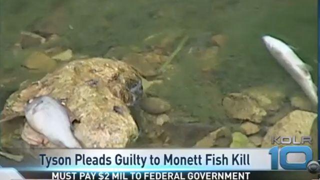 Tyson fish kill_1519833072572.jpg.jpg