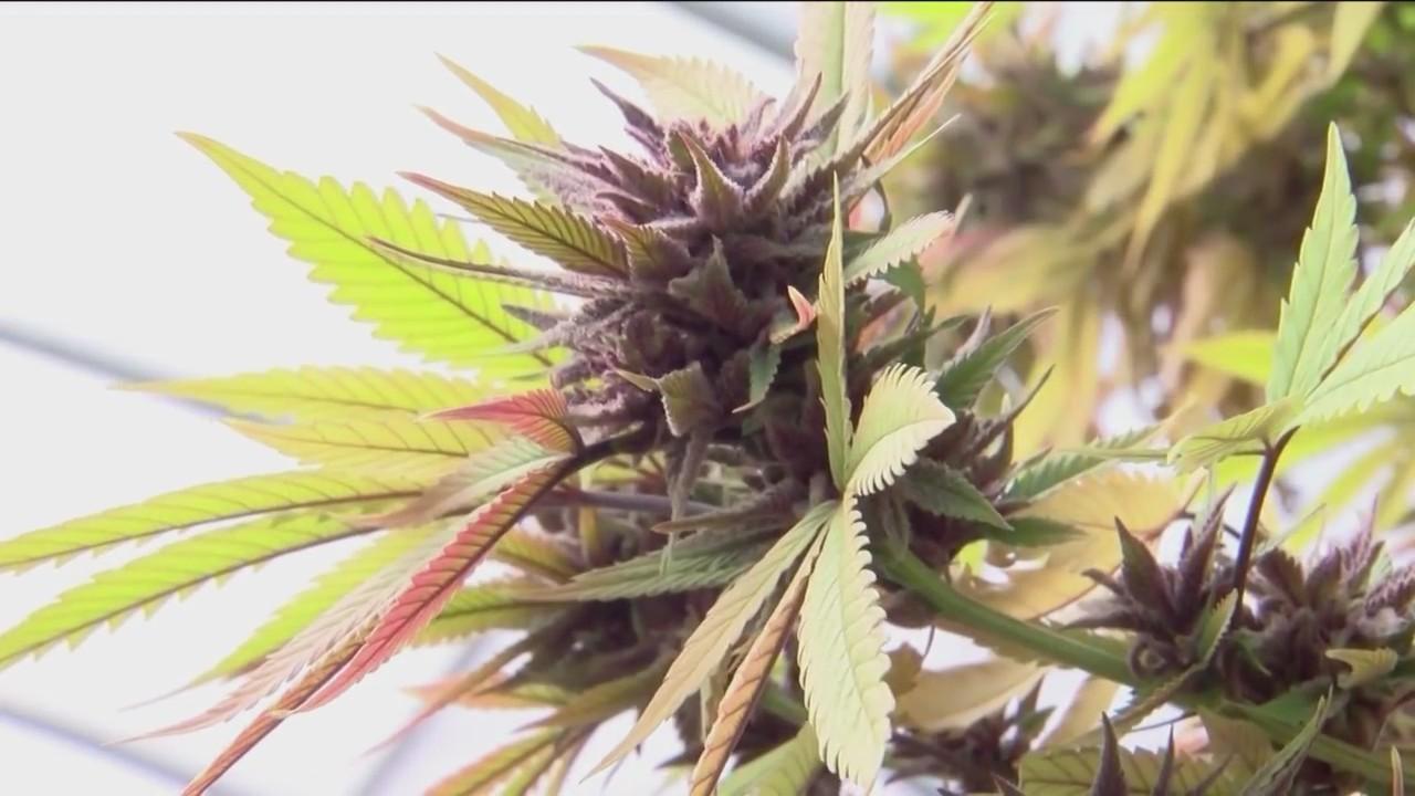 Changes_in_Who_Scores_Medical_Marijuana__0_20181017230111