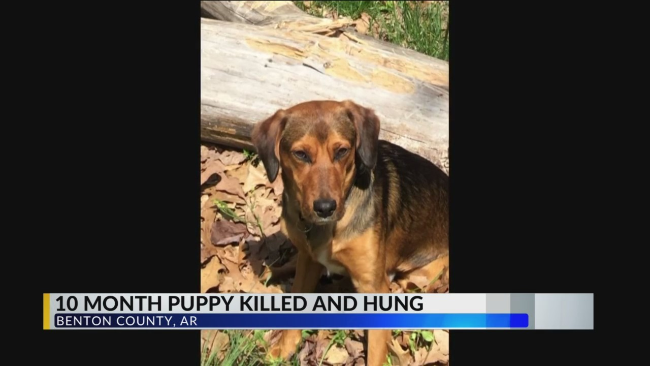 Arkansas_family_finds_dog_hanging_in_yar_0_20190421021113