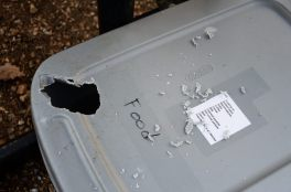 Picture of where a squirrel has gnawed its way into a plastic food box