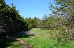 The trail and a typical example of the many glades to be found on the Sac River Trail.