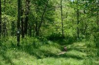 Note the trail marker on the left. Busiek State Forest and Wildlife Area - White Trail