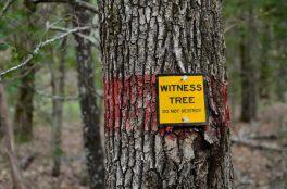 Witness Tree - near Coy Bald Trailhead
