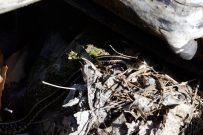 Hercules Glades Wilderness - Garter Snake