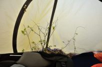 Leave no trace - even if it means we have an indoor plant
