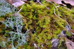 Trail-side moss
