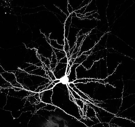 neurons-91