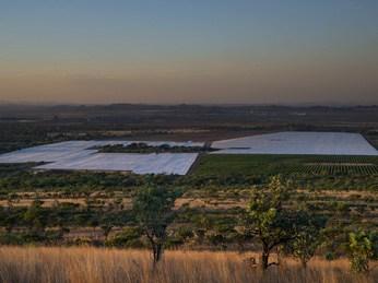 OZblu Nyami Berry Farm