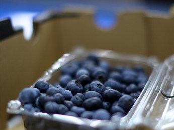 OZblu blueberry packaging
