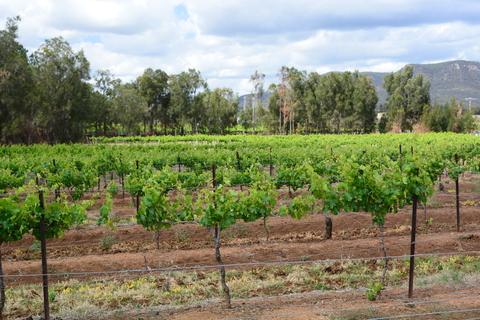 Migration agent Perth, Mundaring and Kalamunda
