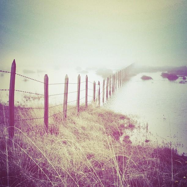 Nostalgia rima con neblina