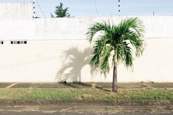 My Week in Pictures – Palmas
