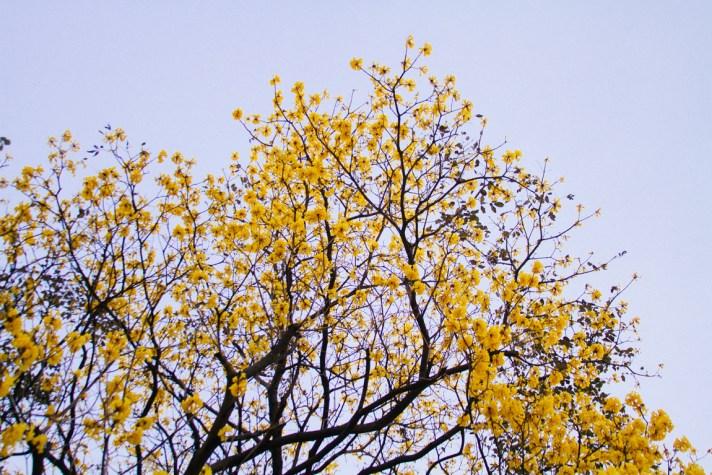 Primavera en el Trópico